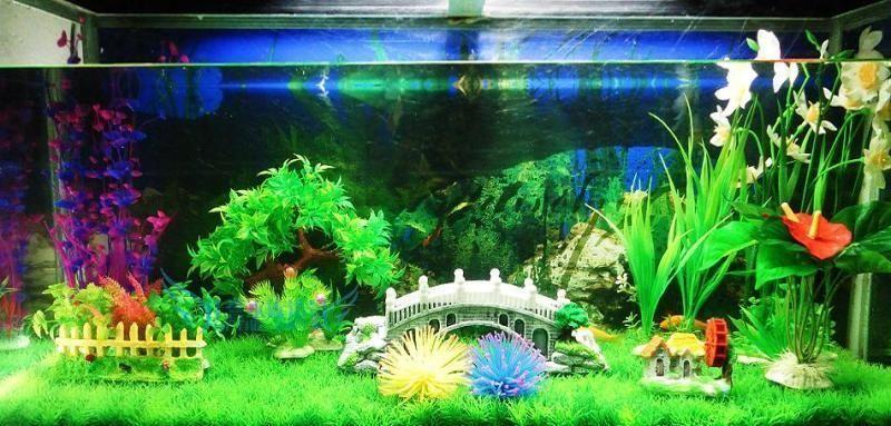 水族鱼缸造景 水草摆放小诀窍